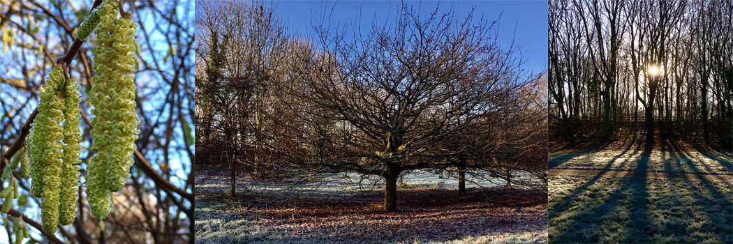 <Tarvin Woodland Walk